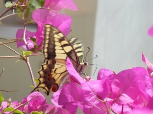 Social Group Holidays - Crete Butterfly